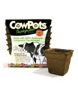 Cowpots Biodegradable Seedling Planters Square Size 4 12 Pack with Pot