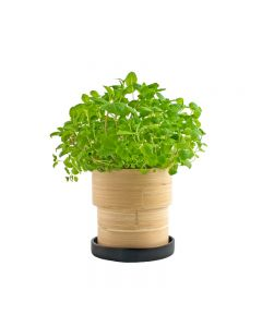 Mint Bamboo Grow Pot