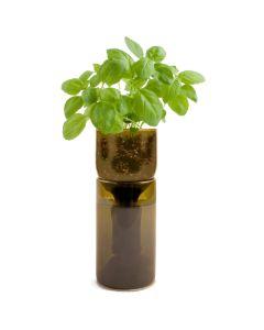 grow bottle basil