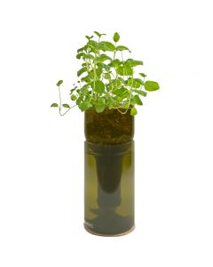 grow bottle mint