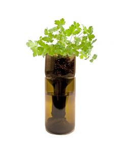 grow bottle parsley