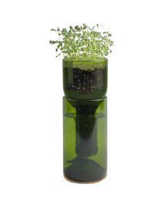 grow bottle thyme