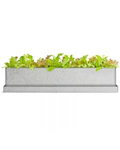 window sill grow box lettuce